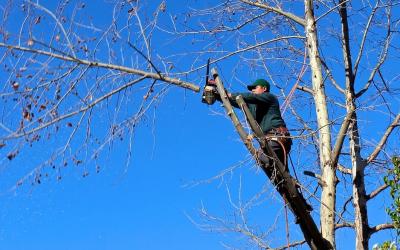 La plantation d'arbres dans la commune de Neupré doit être plus conséquente pour combler l'abattage successif