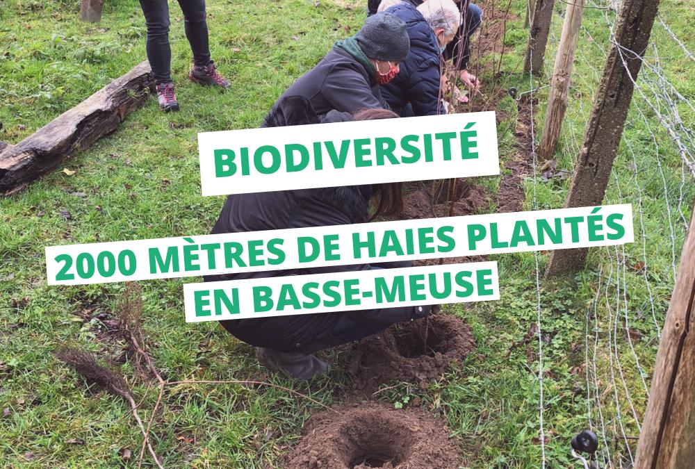 Yes We Plant ! 2000 mètres de haies plantés en Basse-Meuse