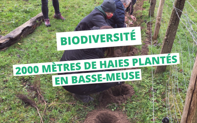 Yes We Plant ! 2000 mètres de haies plantés en Basse-Meuse